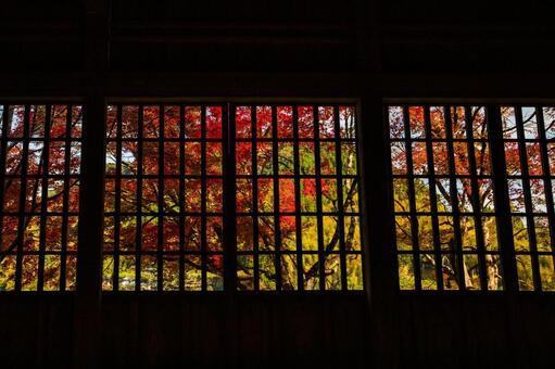 Maple autumn leaves Akiwa