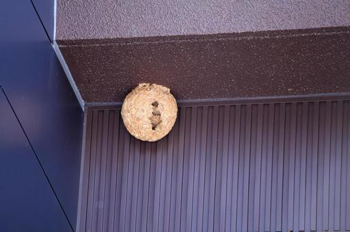 Beehive at the eaves