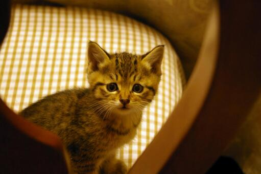 Question cat lacco 29