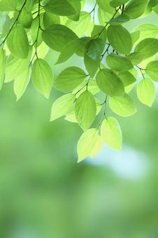 Fresh green image (vertical composition)