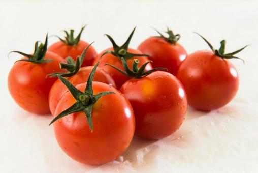 White back mini tomato 16