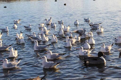 Lively birds
