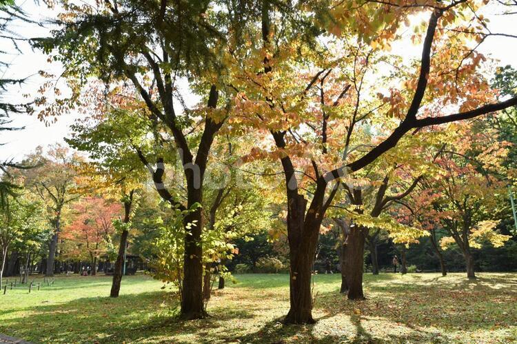 秋のお散歩 晴れの日の写真
