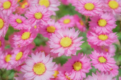 핑크 꽃 배경