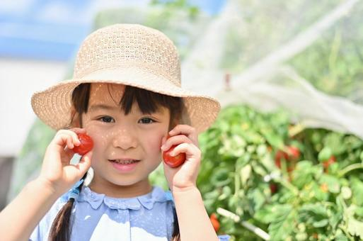 A smiling girl harvesting petit tomatoes in the field Summer 1
