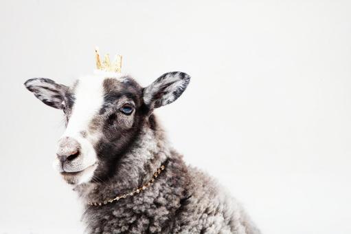 Crown crown 5