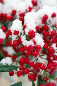南部水果与雪