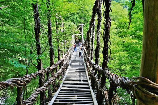 Fresh green Okuya Kazura Bridge