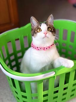Favorite basket