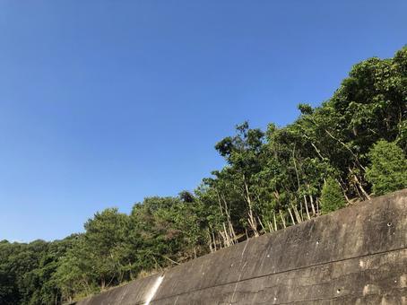옹벽과 산의 나무