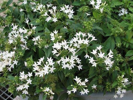 흰 꽃 1