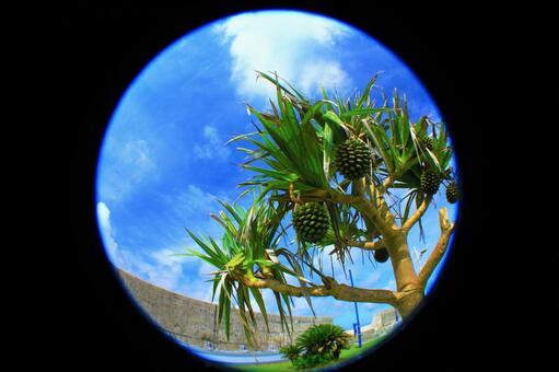 여름 이미지 ~ 어안 촬영 한 남국 · 기 카이 지마의 아단