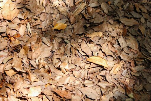 낙엽 (낙엽)