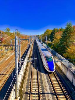 Shinkansen and autumn leaves