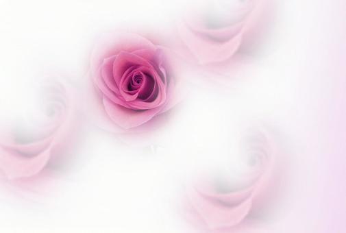 꽃의 여왕 장미 엽서 레드