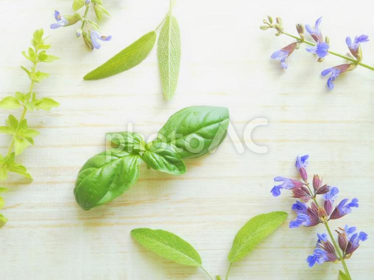 ハーブ バジルとオレガノの葉とセージの花の写真
