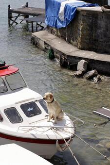 Dog on ship