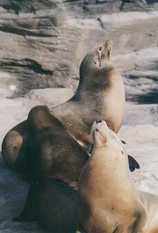 Seal [seal] -010