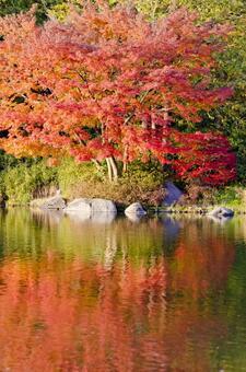 Fall landscape 12