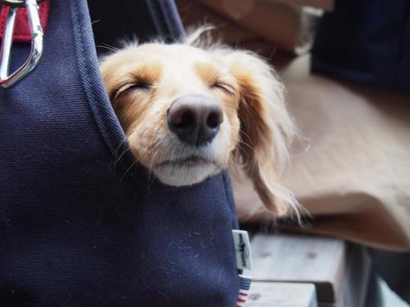 Dog sleeping in a bag