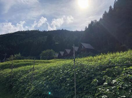 시골 풍경