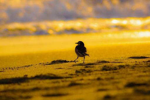 석양에 비춰지는 해변과 조류의 실루엣