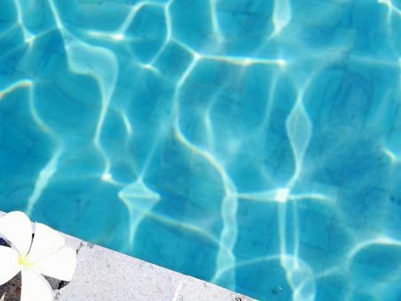 Plumeria 1 on the pool side