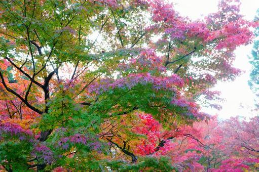 Kyoto Eikando Sunbeams through the autumnal trees