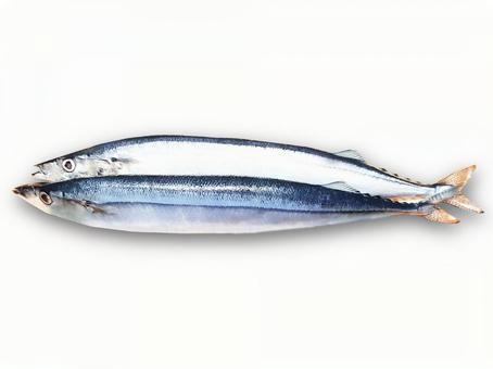 pacific saury / Fresh fish / Autumn taste / Food