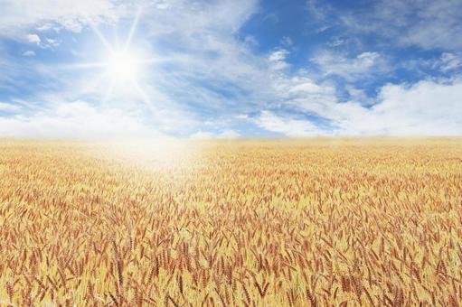 보리밭의 푸른 하늘