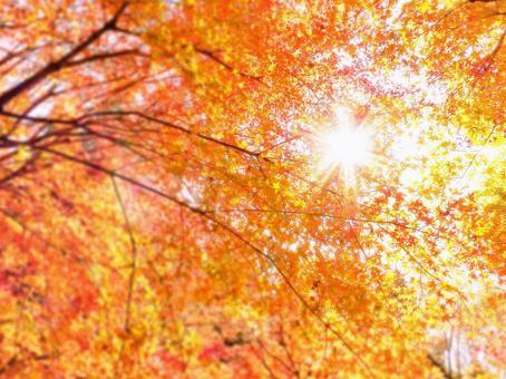 與閃閃發光的陽光和秋葉楓葉背景光的秋季壁紙