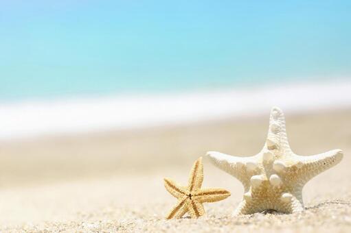 해변 불가사리 2