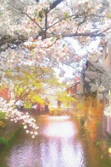 Kyoto Sakura and Ogawa 01