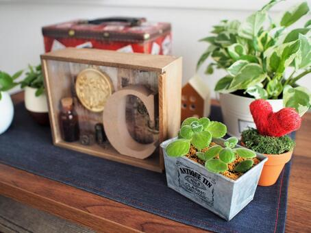 Plant and interior goods