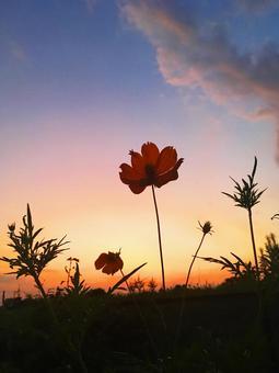 CD 쟈켓의 일몰 하늘과 꽃의 실루엣