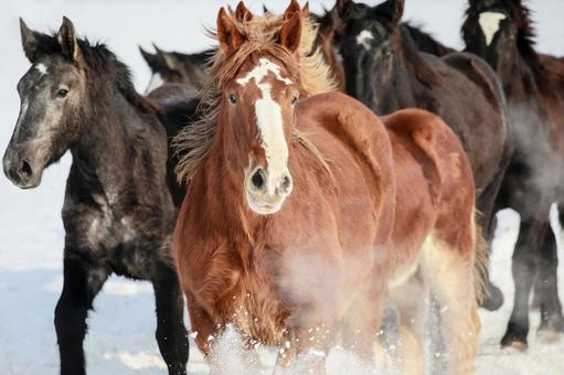 A group of horses running on the snowy field