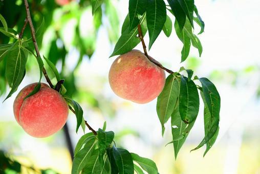 Peach fruit 2
