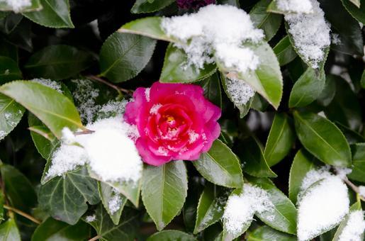 Snow 27