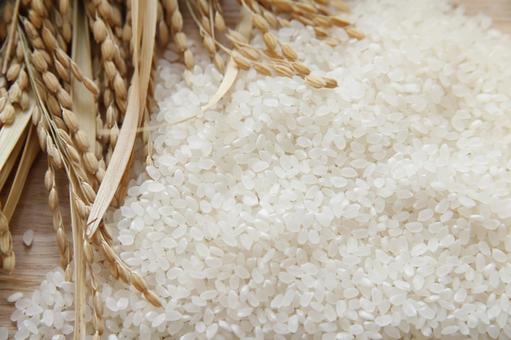 벼와 쌀 3