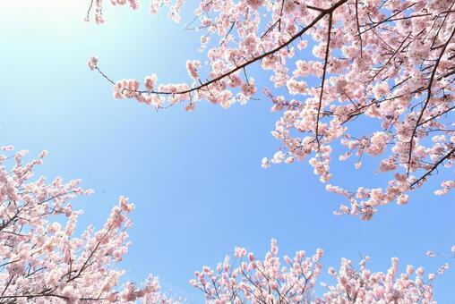 桜 green sky
