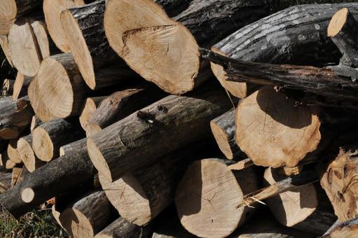 수목의 벌채