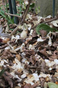 클레 마티스의 꽃잎