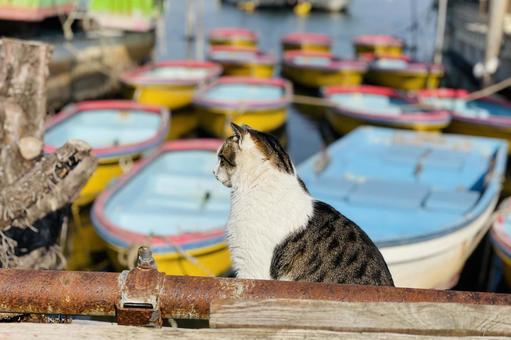 선착장에서 사는 노라 고양이 뒷모습