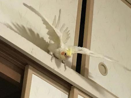 저의 날개, 이쁘죠!