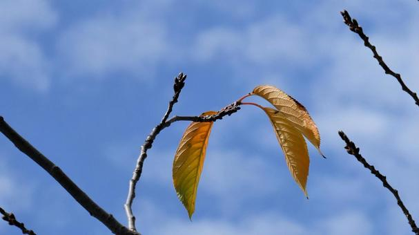Swaying in the autumn breeze