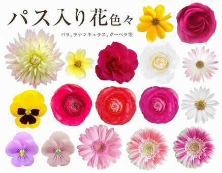 各种鲜花与剪辑通行证
