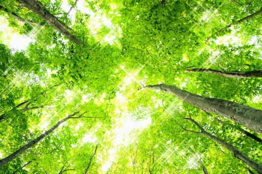 Glittering beech forest 2