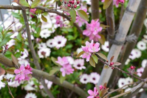 핑크 나무 꽃과 마가렛