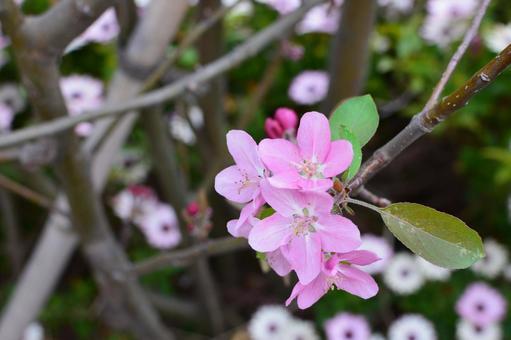 분홍색 나무 꽃