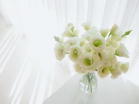 Living with flowers Turkish bellflower